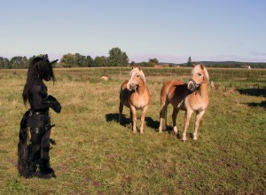 HorseyToll05